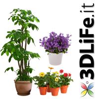 piante piccole da interno